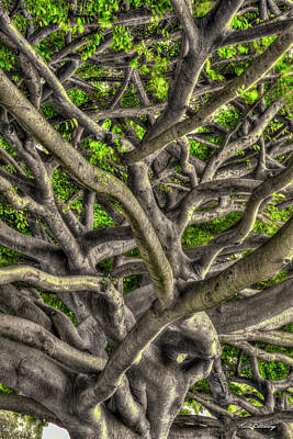 Photograph - Complexed Design Oahu Native Trees Hawaii Collection Art by Reid Callaway