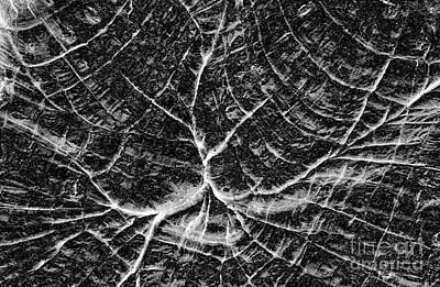 Photograph - Complexity Black And White Abstract by John Stephens