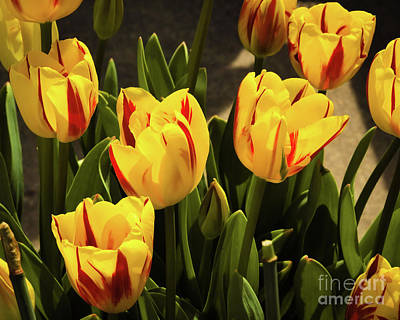 Photograph - Complimentary Colors by Jon Burch Photography