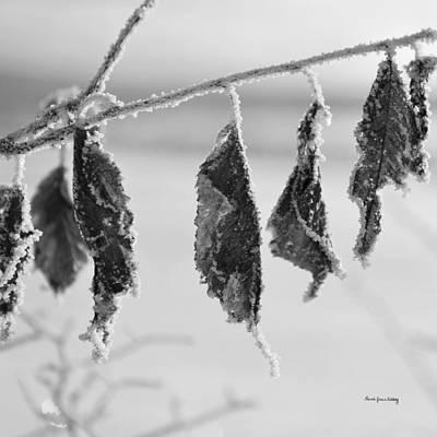 Photograph - Composedness by Randi Grace Nilsberg