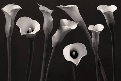 White Lily Photograph - Composition With Calla Lily by Floriana Barbu