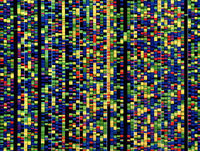 Computer Screen Showing A Human Genetic Sequence Art Print