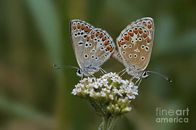 Butterfly Abstraction Photograph - Comtact by Michal Boubin