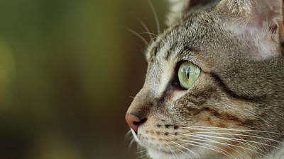 Of Cats Photograph - Concentration by Copyright Faraaz Abdool/Hector de Corazón