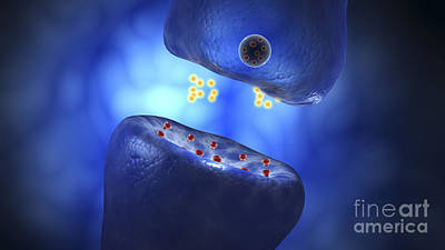 Conceptual Image Of Synaptic Art Print by Stocktrek Images