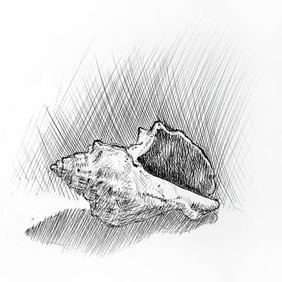 Conch A Pen And Ink Drawing  Art Print