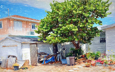 Photograph - Conch Key Sea Grape Tree 3 by Ginger Wakem