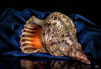 Photograph - Conch Shell by Endre Balogh