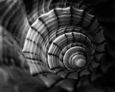 Photograph - Conch Shell In Black And White by Chrystal Mimbs