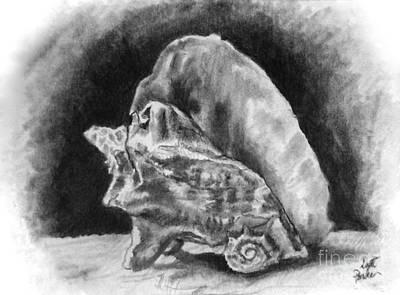 Conch Shell Art Print