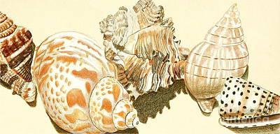 Conch Shells Original by Glenda Zuckerman