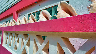 Photograph - Conch Shells On A Pink Wall - Ambergris Caye, Belize by Waterdancer