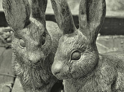 Photograph - Concrete Cottontails  by JAMART Photography