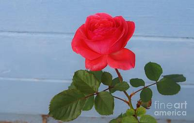 Photograph - Concrete Rose by Angela J Wright