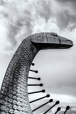 Photograph - Concrete Serpent by Robert FERD Frank