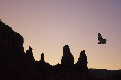 Photograph - Condor Flight At Twilight by David Gordon