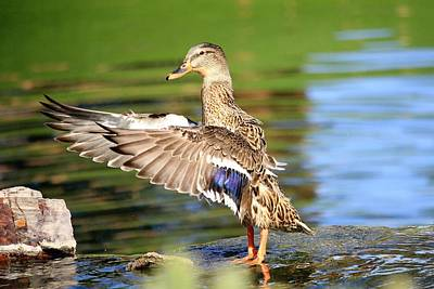 Photograph - Conduckting by Greg Wickenburg