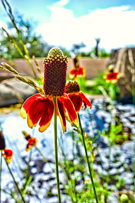 Bath Time Rights Managed Images - Cone Flower and Pond Royalty-Free Image by Robert Meyers-Lussier