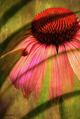 Photograph - Cone Flower And The Ladybug by Lesa Fine