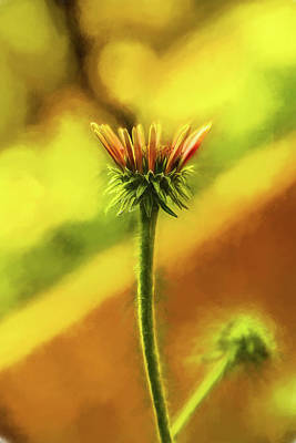 Photograph - Cone Flower Baby Watercolor by Kay Brewer