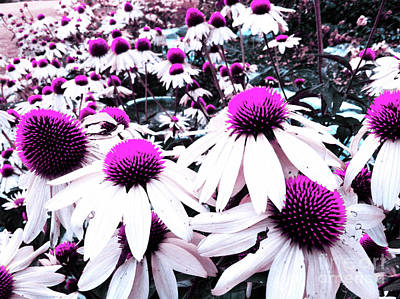 Photograph - Cone Flower Delight by Kevyn Bashore