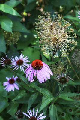 Photograph - Cone Flower In Dow Gardens 3 by Mary Bedy