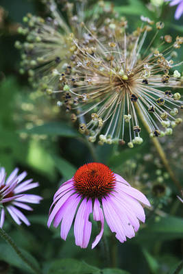 Photograph - Cone Flower In Dow Gardens by Mary Bedy
