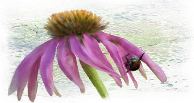 Cone Flower With Bug Art Print