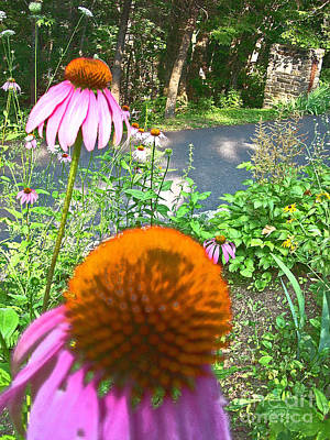 Cone Flowers And Others Art Print by Beebe  Barksdale-Bruner