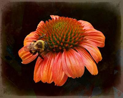 Photograph - Coneflower And Bee by Joe Duket
