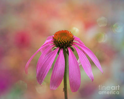 Photograph - Coneflower Art by Mary Bellew