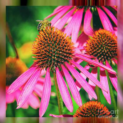 Coneflower Bee Art Print by Kasia Bitner