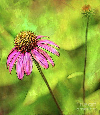 Photograph - Coneflower Impression by Judi Bagwell