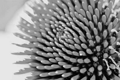 Photograph - Coneflower by Jeff Montgomery