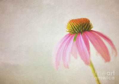 Photograph - Coneflower by Michael James