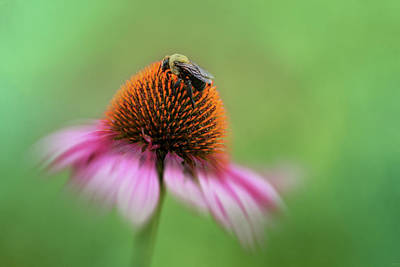 Photograph - Coneflower Visitor by Jai Johnson