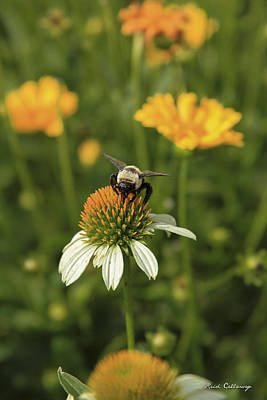 Photograph - The Visitor Coneflower Bee Art by Reid Callaway