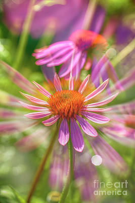 Abstract Flowers Royalty-Free and Rights-Managed Images - Coneflowers 2 by Veikko Suikkanen