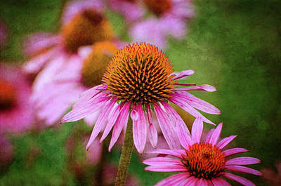 Photograph - Coneflowers A Plenty by Susan McMenamin