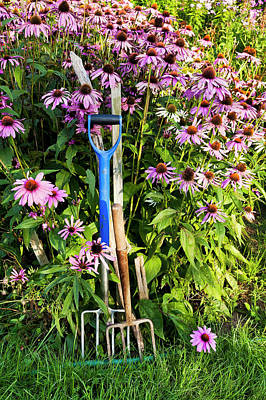 Photograph - Coneflowers And Garden Tools by Alan L Graham