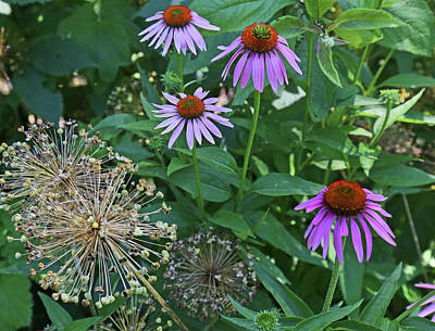Photograph - Coneflowers In Dow Gardens 2 by Mary Bedy