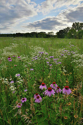 Photograph - Coneflowers In Shelley Kelly Prairie by Ray Mathis