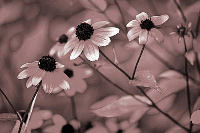 Photograph - Coneflowers No. 8-3 by Sandy Taylor