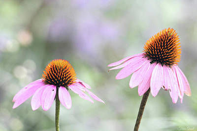 Photograph - Coneflowers On A Summer Day by Trina Ansel