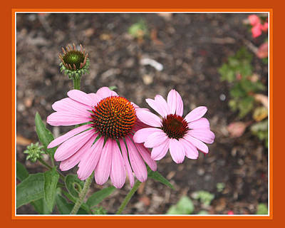Coneflowers Art Print by Susan Alvaro