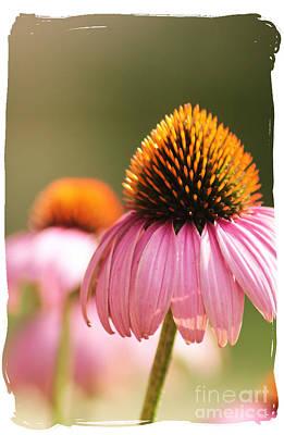 Photograph - Conehead Echinasea by Lori Mellen-Pagliaro