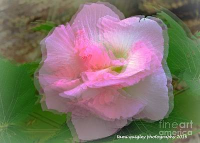 Photograph - Confederate Rose by Tami Quigley