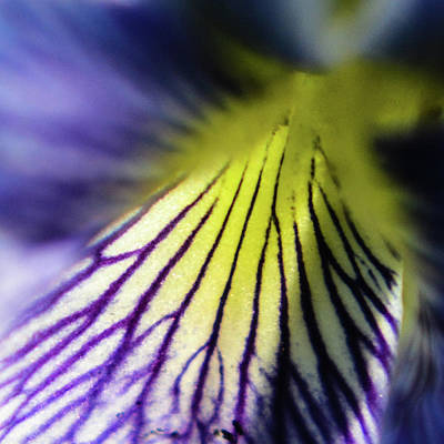 Photograph - Violet Macro by Tana Reiff