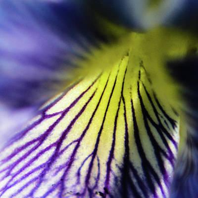 Photograph - Violet Macro by Tana Reiff