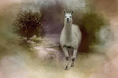 Photograph - Confidence Llama Art by Jai Johnson